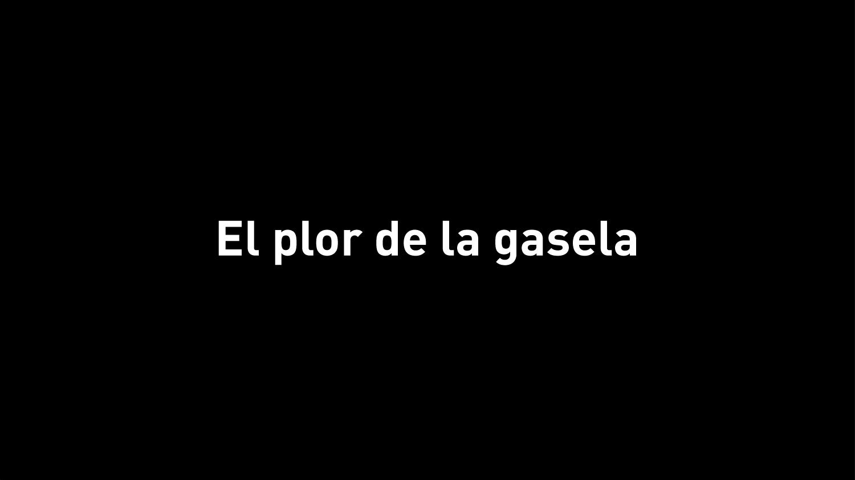 gasela_int2.jpg